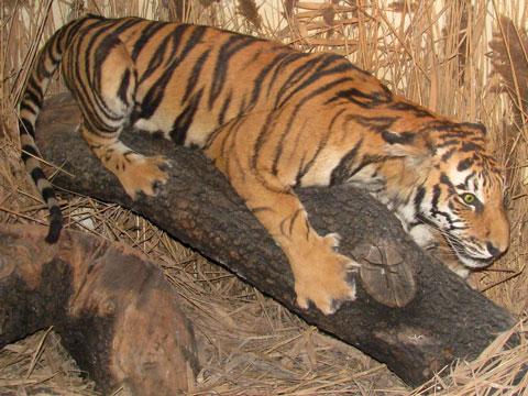 crouching-tiger-480x360