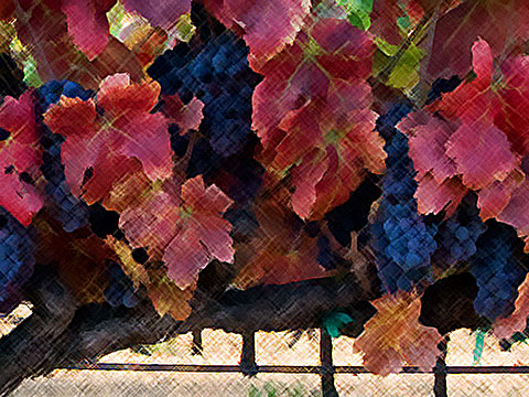grape-vines-crosshatch-web