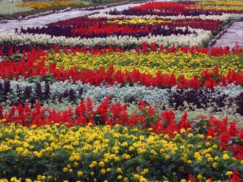 balchik-garden-flower-beds-480x360