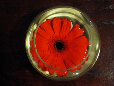 flanagans-flower
