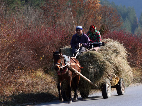 hay-for-winter