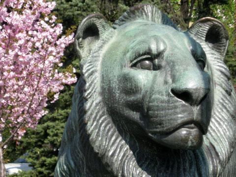 sveta sofia lion-w-cherry-blossom