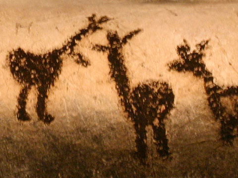 magura-cave-drawings-animal-herd-480x360.jpg
