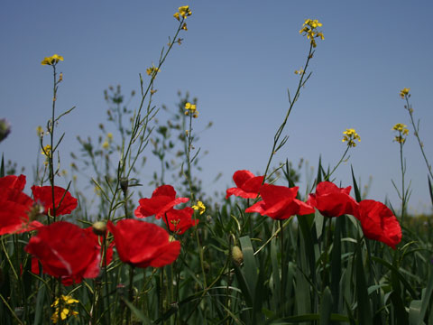 wildflowers-04