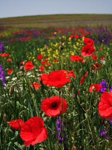 wildflowers-12