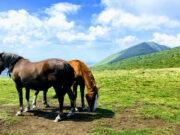 peak kom horses